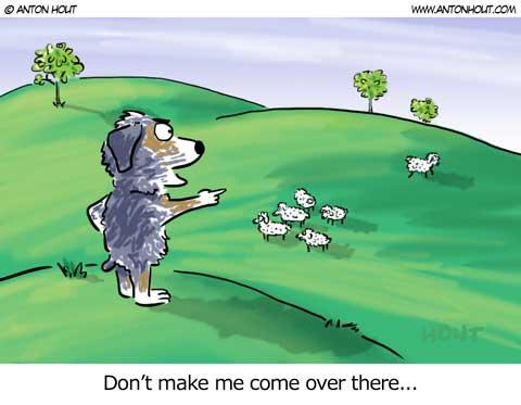 Australian Shepherd Lovers - Cartoon of the Week - from AntonHout.com
