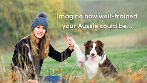 Imagine how well-trained your Aussie could be...