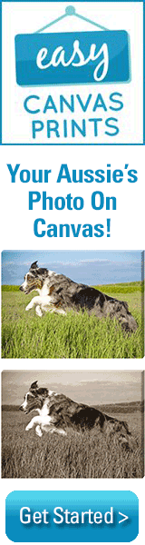 Get Your Aussie's Photo On Canvas