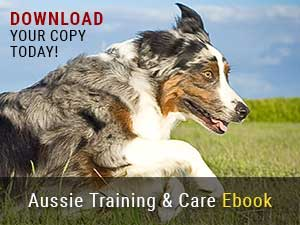 Our Official Guide To Australian Shepherd Training & Care Ebook