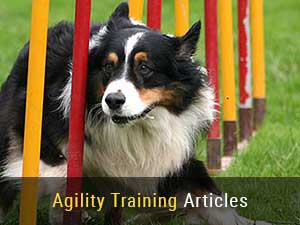 Dog Agility Training Articles
