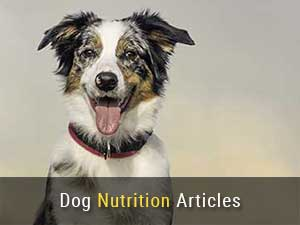 Dog Nutrition Articles