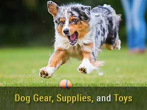 Articles about Dog Gear, Supplies, and Toys