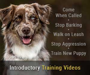 Introductory Dog and Puppy Training Videos