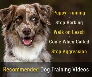 Recommended Dog and Puppy Training Videos