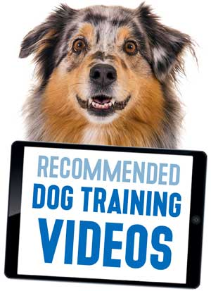 Recommended Dog Training Videos