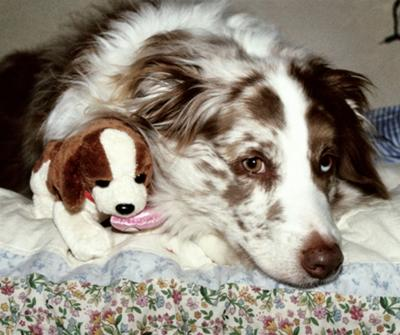 Mocha and her toy puppy