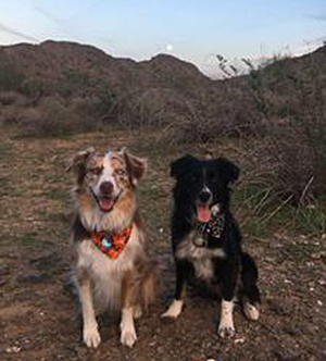 GF Aussie is the red merle and mine is the black one