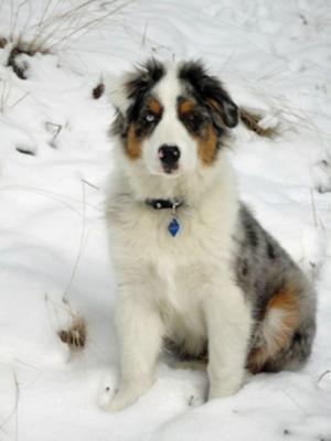 Apache 1st snow