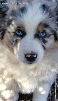 Brody Blue Eyes
