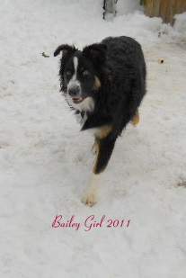 Bailey Girl
