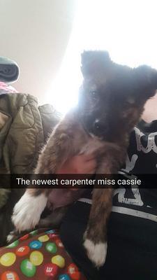 Cassie at 3 months