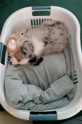 Bindy in the basket