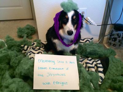 Dog Agility Training Lawrence Ks