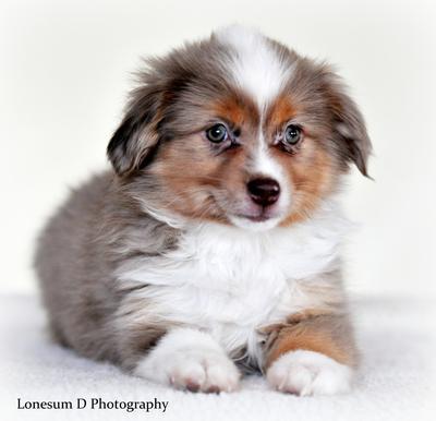 Finnegan - pup