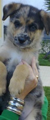 Zaida 7 weeks