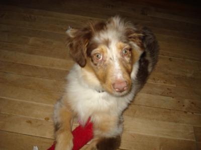 Jasper at 4 months