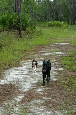 Saturday morning hikes!