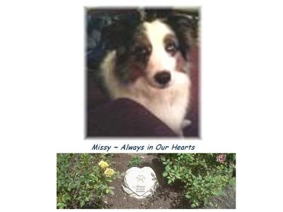 Missy ~ Always in our Hearts