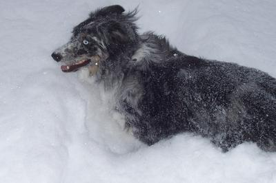 Monty snow