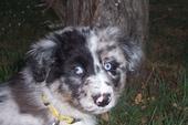 Monty puppy