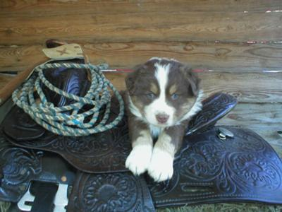 Bear's baby picture when I fell in love with him