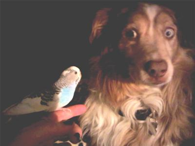 Scruffy and my bird Moose. Moose loved him and Scruffy was terrified of her. She would fly to the ground to be with him and he would run away as she chased him running on the ground, it was so funny to see