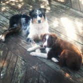 Tucker and Ginger enjoying a day in the sun!