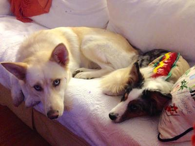 Luna (left) Sadie (right)