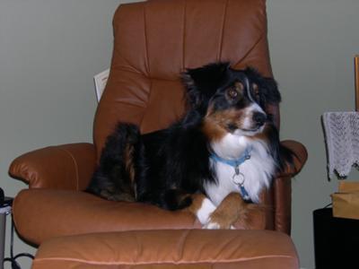 Molly Bear Sitting Pretty - almost 2 yrs old.