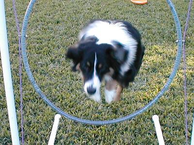 Jumping his hoop