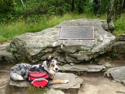 Sampson, my Hiking Buddy