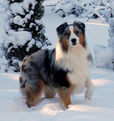Smooch in the Snowy Adirondacks
