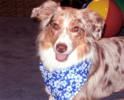 Sooky the therapy dog