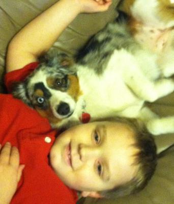 Dog Agility Training Omaha Ne