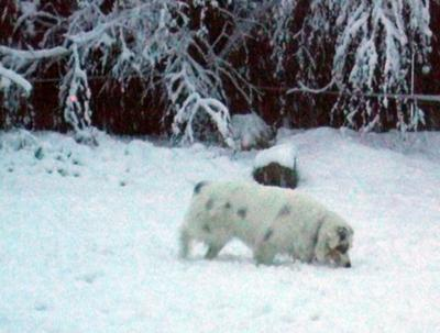 Jasmine in the Snow Dec 08