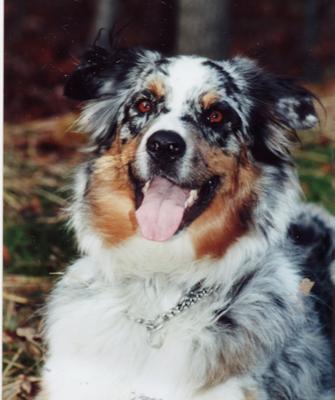 Patti's Lawman Dillon May 12, 1995-June 24, 2007