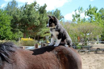 Already riding horses at 11 weeks old