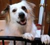 Riley my deaf dog