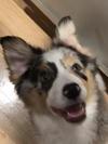 Crazy ears