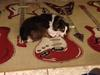 Napping on my guitar rug