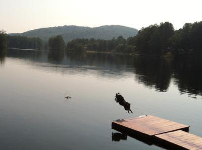 Morning dock dive