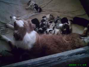 Sam's mother with litter-2