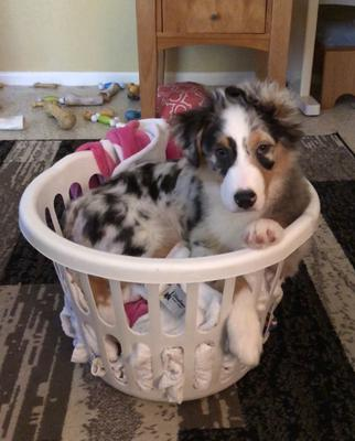 Helping Mom with the laundry