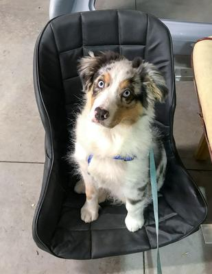Audi loves fast, open cars, and his driving seat