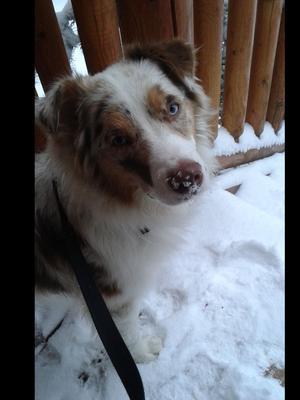 Milo loves the snow