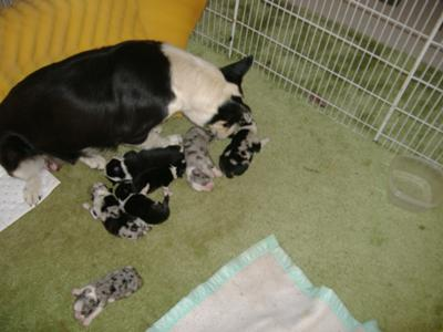 Mother with pups