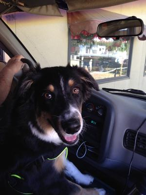 Ayla wants to drive