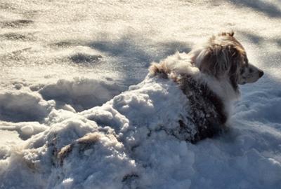 Mocha in the snow