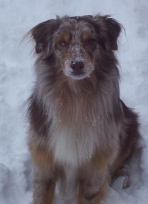 Gonzo Playing in Snow... Spokane, WA